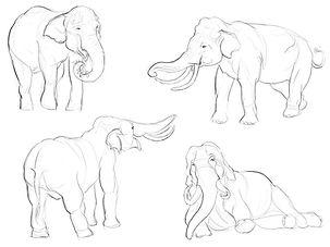 Elephant Observation Sketching.jpg