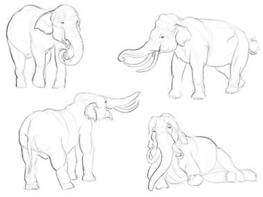 Elephant Observation Sketches