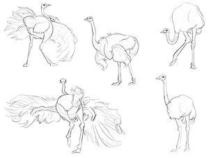 Ostrich Observation Sketching.jpg
