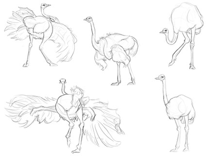 Ostrich Observation Sketches