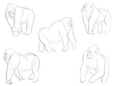 Gorilla Observation Sketches