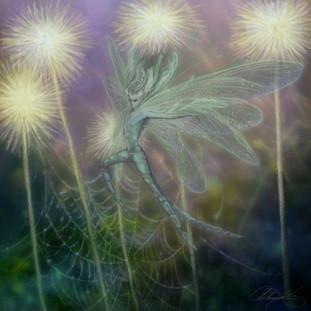 Dromaria small web.jpg