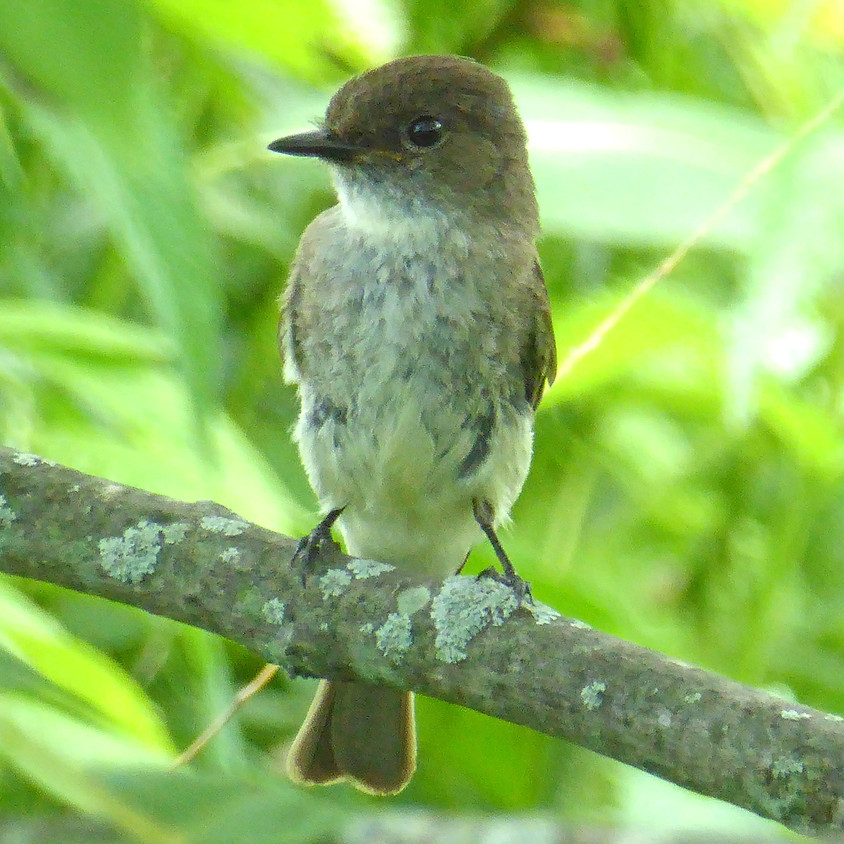 Birds of the Floodplain Forest