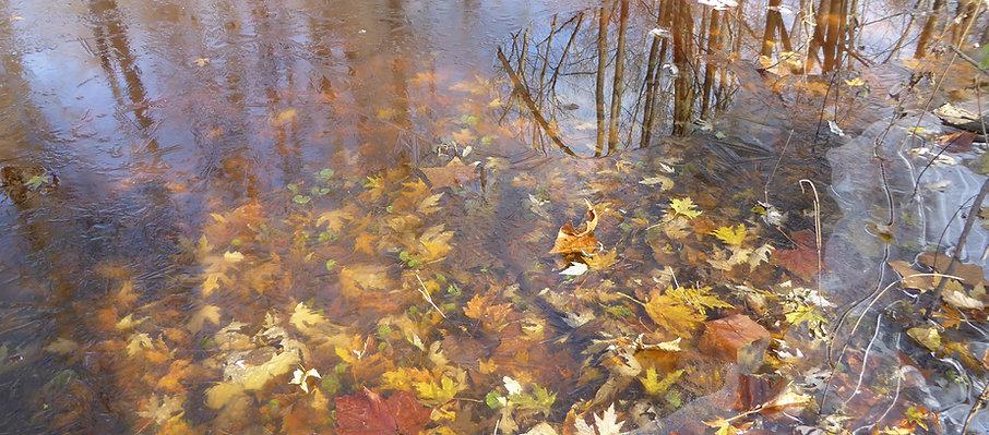 SZ_WIDE_leaves_in_frozen_river_Brady_MR_