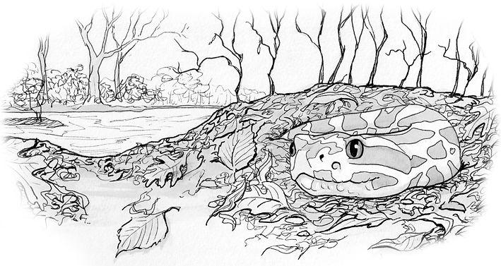 Snake illustration by Noah Clements