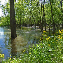 Floodplain at Sangamon River Corridor Reserve