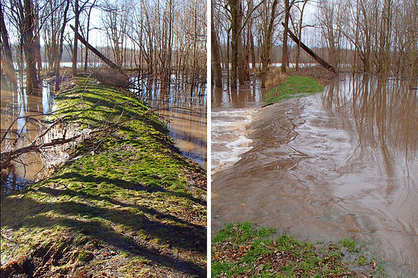 Flooding over levee trail at Sangamon River Corridor Reserve