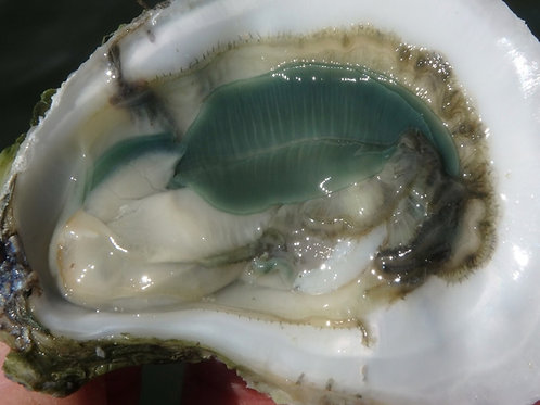 Atlantic Emeralds™ by Sandbar Oyster Company