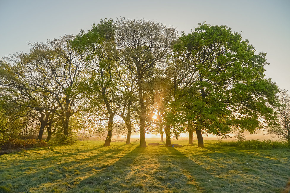 Misty Morning (14 of 18).jpg