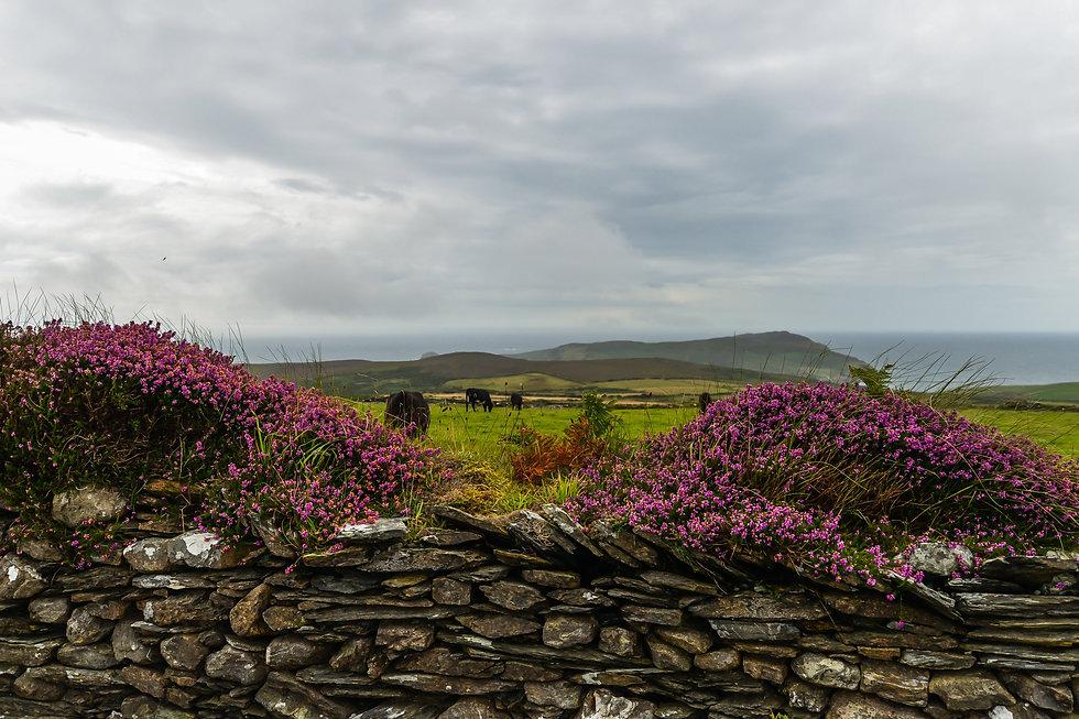 Isle of Man (17 of 46).jpg