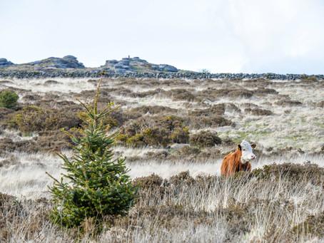 Animals of Dartmoor