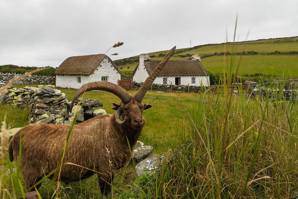 Isle of Man (6 of 46).jpg