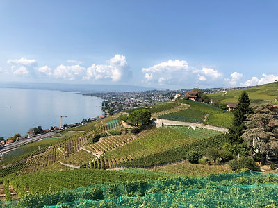 lavaux_view_2018.jpeg