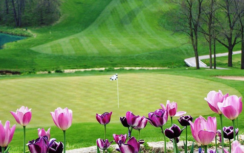 cropped-Spring_Tulips-1024x645.jpg
