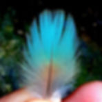Even the smallest feather_becomes a work