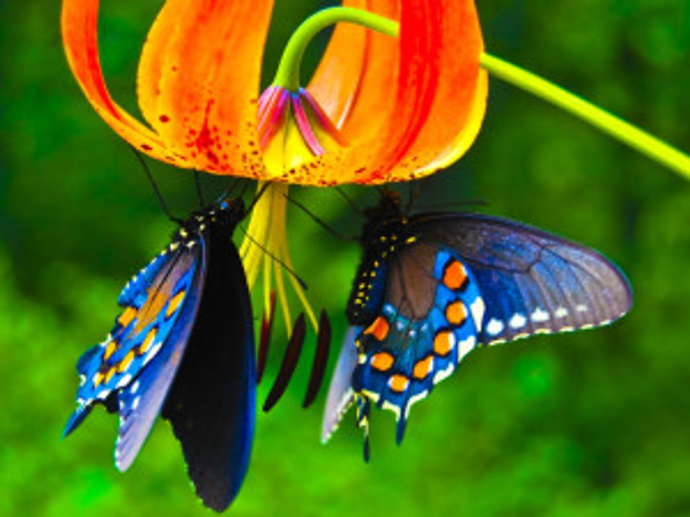 Butterfly-and-Flower-Pictures-10-HD-Screensavers