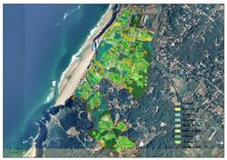 Praia Grande Vegetação