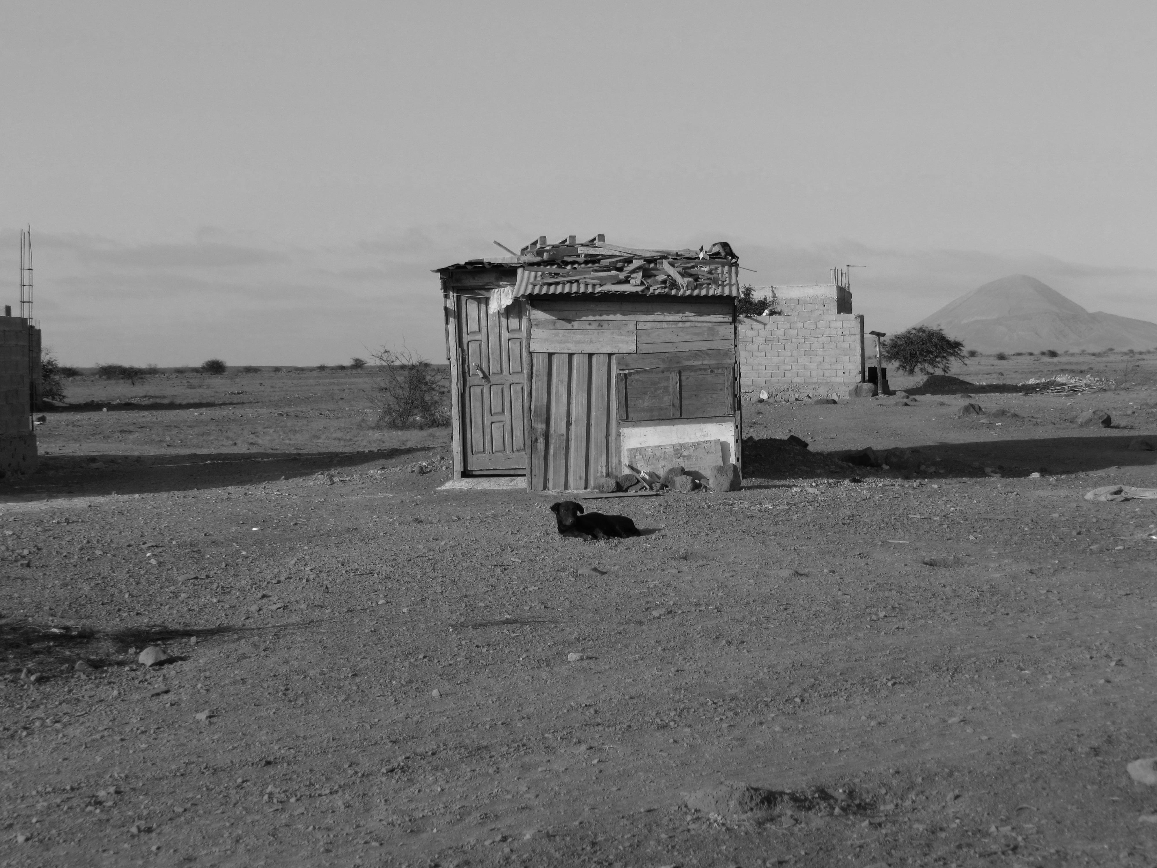 House - Palmeiras