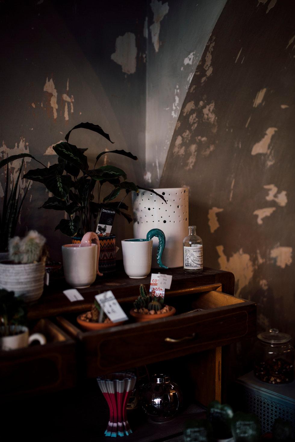materia,negozio,fiori,piante,fiorista,re