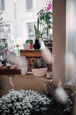 materia,rezzato,negozio di fiori,fiorist