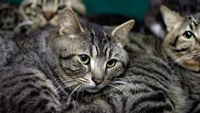 動物虐待の通報 共通ダイヤルへ