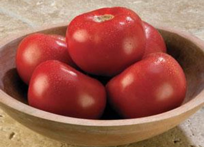 Tomatoes - Slicers