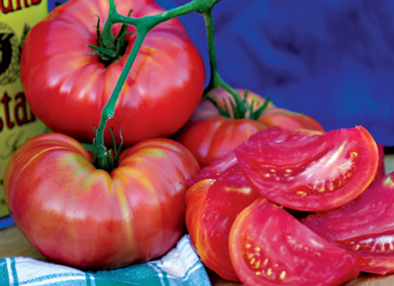 Tomatoes - Limited Supply