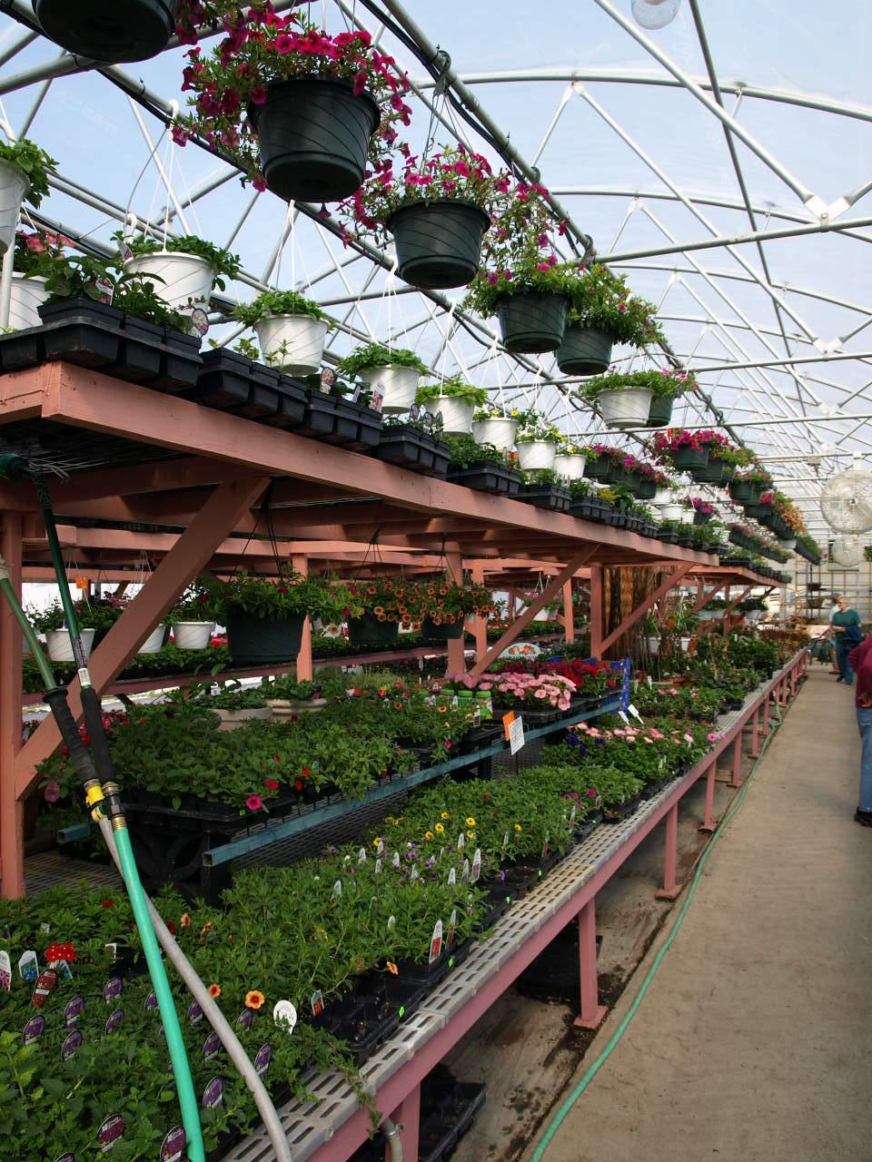 Hanging Baskets Galore