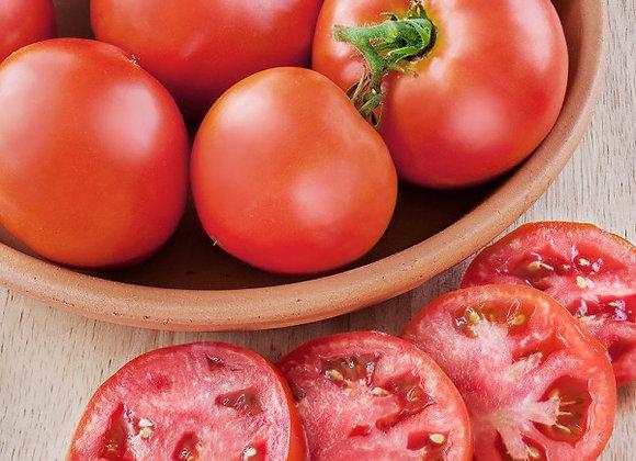 Tomatoes - Patio