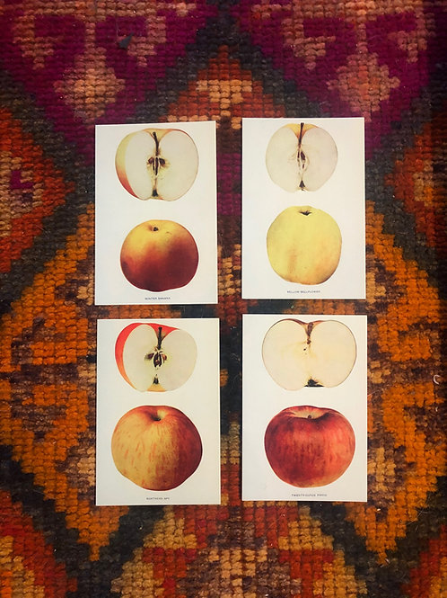 4 Apple Postcards