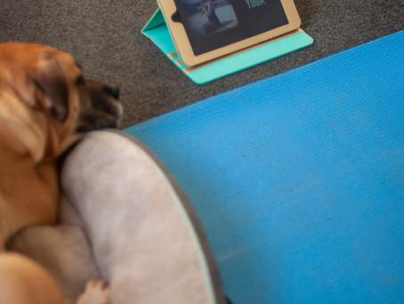 Shell's fave yoga & meditation tracks
