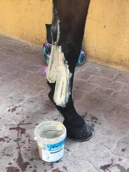REcup ARGILE pose cataplasme cheval pone