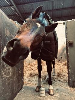 skalypso cheval onguent hydratant elegan