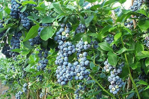 Blue Crop