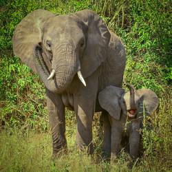 Elephants, Tarangire National Park, Tanzania