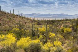 Saguaro National Park, Arizona, USA