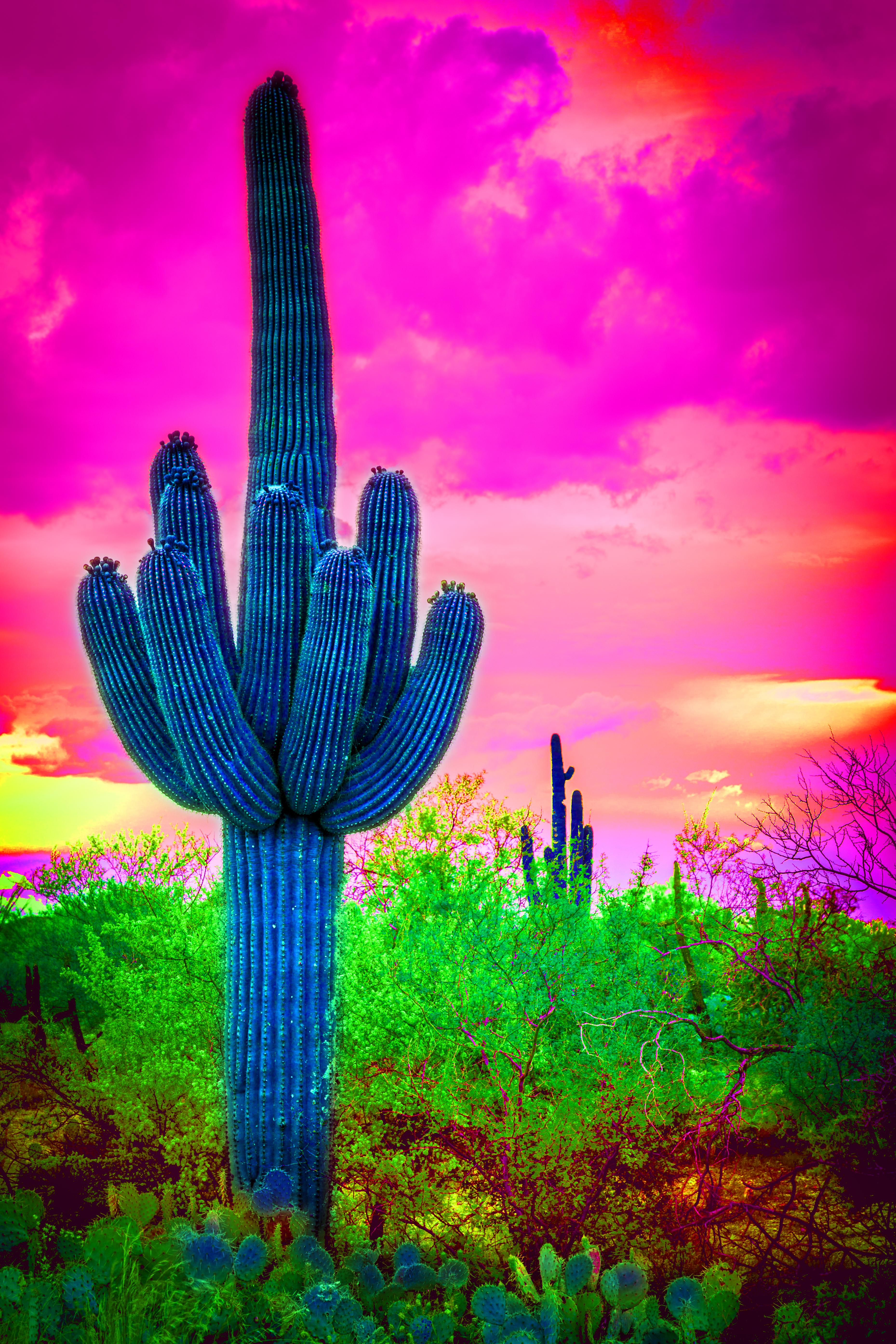 Saguaro Cactus, Saguaro National Park, Arizona, USA