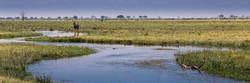 Water Buck, Savuti Marsh Area, Botswana
