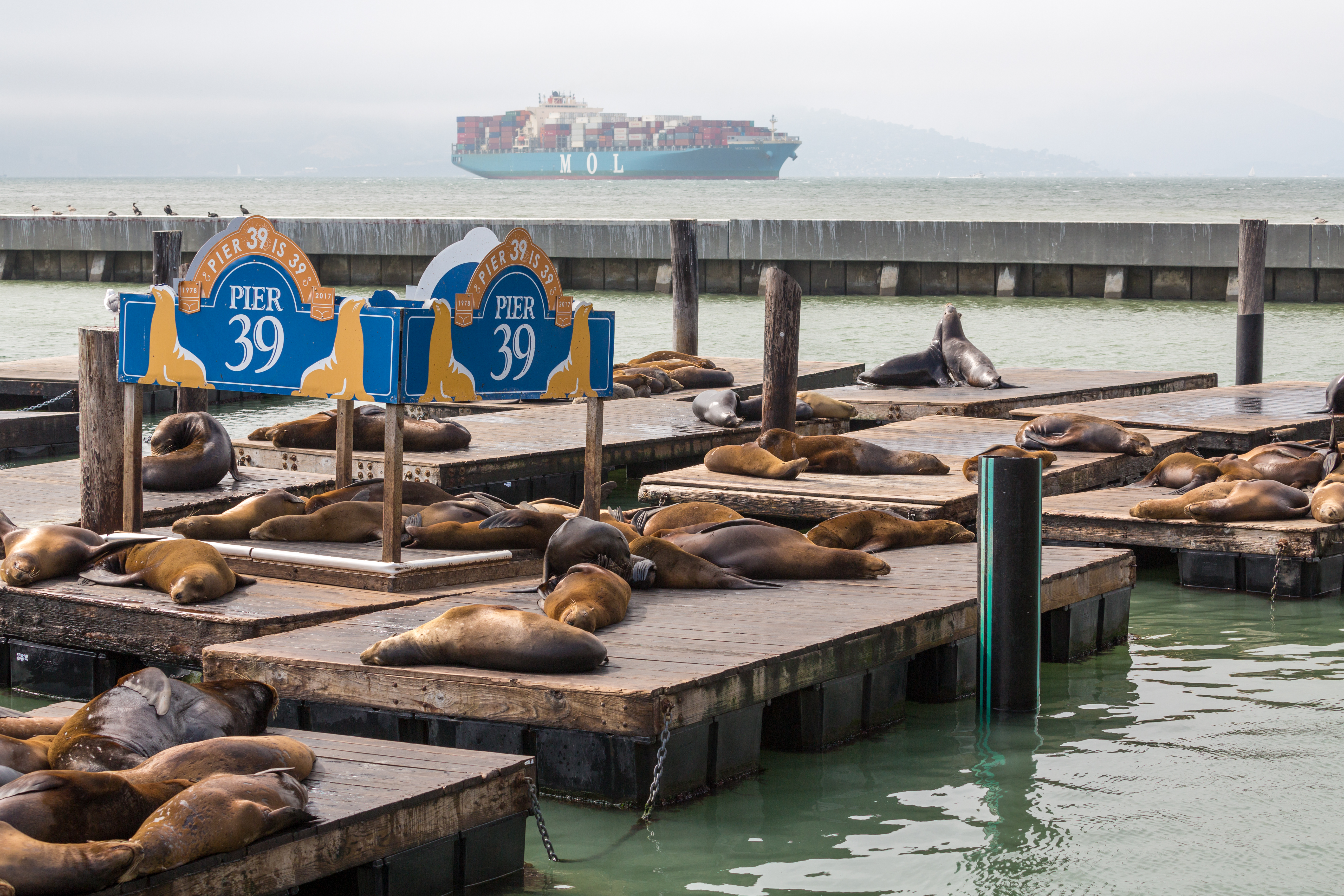 Sea Lions, California, USA
