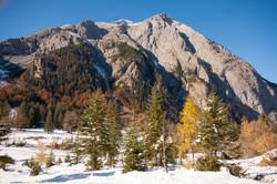 Fall Forest, Eng-Alm, Austria