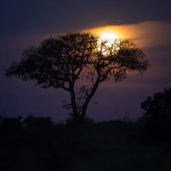 Manyeleti Game Reserve, South Africa