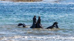 Elephant Seals, California, USA