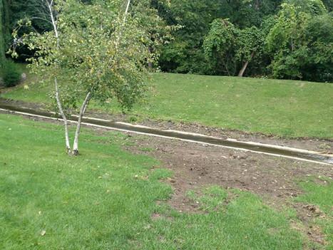 Yard Repair Before
