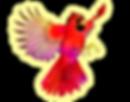 Cardinal-flying (1).png