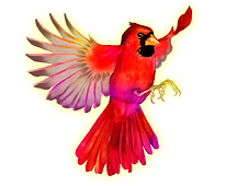 Cardinal-flying (1).png
