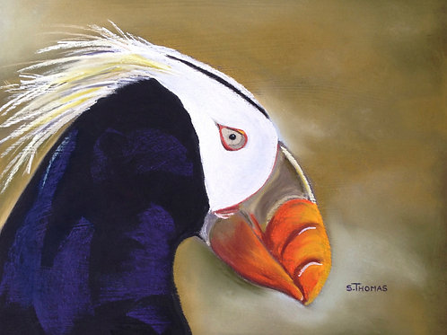 ST28 Horace - Tufted Puffin