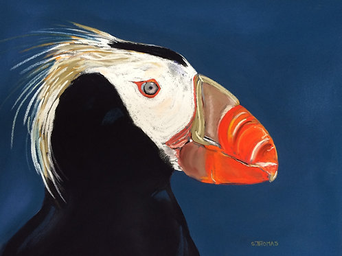 ST34 Hugo - Tufted Puffin