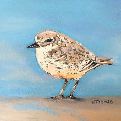 ST69 Oliver - Snowy Plover