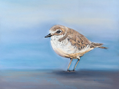 ST48 Churchill - Snowy Plover