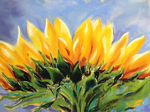 ST38 Elegance - Sunflower